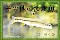 その他の淡水魚